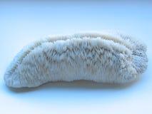 珊瑚石白色 免版税图库摄影