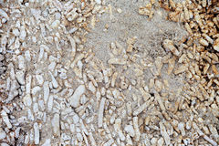 珊瑚石头 库存图片