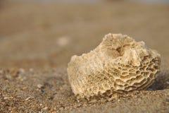 珊瑚石头 免版税库存照片