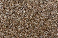 珊瑚碎片沙子  免版税库存照片