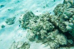 珊瑚礁以热带鱼品种 免版税库存照片