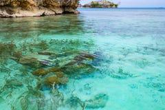 珊瑚礁关闭在热带海中绿松石透明水  在Togian海岛或Togean的未污染的环境 图库摄影
