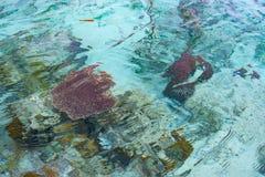 珊瑚礁关闭在热带海中绿松石透明水  在Togian海岛或Togean的未污染的环境 免版税库存图片