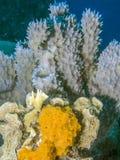珊瑚礁博内尔岛 免版税库存图片