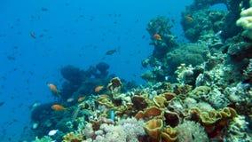 珊瑚礁和热带鱼 库存图片