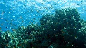 珊瑚礁和热带鱼 免版税库存照片
