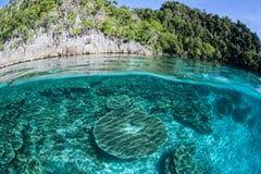 珊瑚礁和石灰石海岛 免版税库存照片