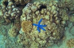 珊瑚礁和蓝色海星顶视图 在海岸水下的照片的海星 库存图片