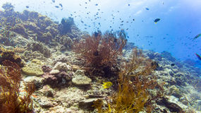 珊瑚礁和鱼在水下热带的海 图库摄影
