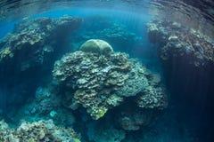 珊瑚礁在所罗门群岛 库存图片