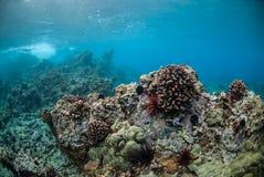 珊瑚礁在毛伊,夏威夷 库存照片