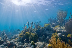 珊瑚礁在波里尼西亚 库存照片