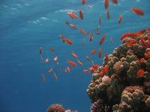珊瑚礁场面 图库摄影