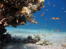 珊瑚礁场面 库存图片