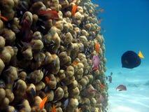 珊瑚礁场面 免版税库存图片