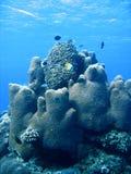 珊瑚礁形成和鱼 库存图片
