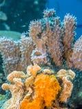 珊瑚礁水下的博内尔岛 图库摄影