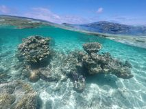 珊瑚礁海洋生活在拉罗通加库克群岛 免版税库存照片