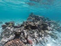 珊瑚礁海洋生活在拉罗通加库克群岛 免版税图库摄影