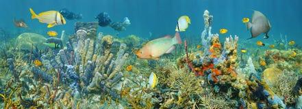 珊瑚礁海洋生物水下的全景 免版税库存图片