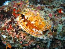 珊瑚礁热带牡蛎 免版税库存照片