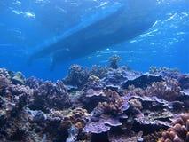 珊瑚礁热带鱼 免版税库存图片