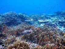 珊瑚礁热带鱼 免版税库存照片