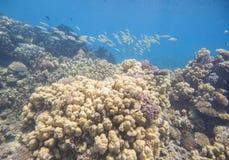 珊瑚礁热带水中 免版税图库摄影