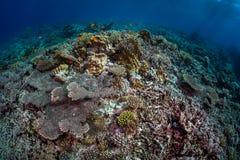 珊瑚礁瓦砾场面 免版税库存照片