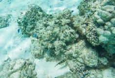珊瑚礁生活从上面 库存照片