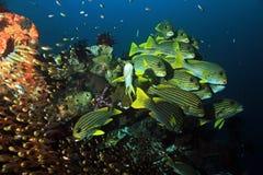 珊瑚礁生活 库存图片