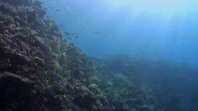 珊瑚礁用攫夺者 股票录像