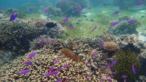 珊瑚礁的水下世界 海中热带鱼 水下世界 珊瑚中的鱼类 股票录像
