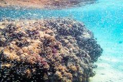 珊瑚礁的水下的射击在红海 库存图片