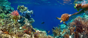 珊瑚礁的水下的全景与五颜六色的sealife 库存照片