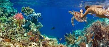 珊瑚礁的水下的全景与五颜六色的sealife 免版税库存图片