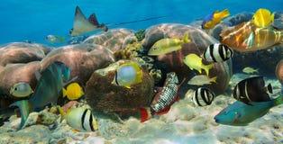 珊瑚礁的水下的全景与鱼 免版税库存图片