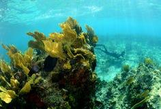 珊瑚礁的水下的图象与spearfishing一个的人的 免版税库存图片
