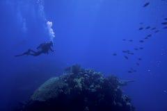 水下的轻潜水员 免版税库存照片