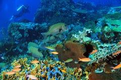 珊瑚礁科莫多岛 库存图片