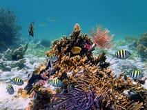 珊瑚礁管蠕虫 免版税图库摄影