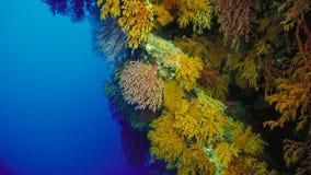 珊瑚礁,大堡礁,澳大利亚 珊瑚鱼横向礁石热带水中 图库摄影