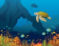 珊瑚礁,鱼,水下的曲拱,乌龟 库存照片