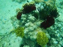 珊瑚礁, El Nido,菲律宾 免版税库存照片