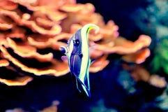 珊瑚礁:自然暗藏的珍宝  库存图片