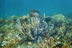 珊瑚礁水下与分支的花瓶海绵 免版税库存图片