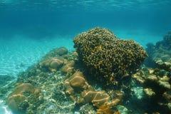 珊瑚礁水下的风景在加勒比海 免版税图库摄影