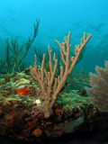 珊瑚礁 库存照片