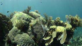 珊瑚礁 影视素材