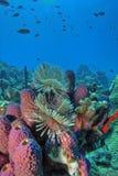 珊瑚礁 免版税库存图片